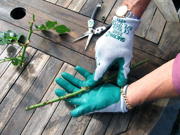Showa Thornmaster 350R Gardening Gloves